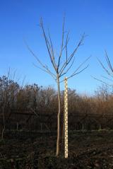 Декоративные древесные растения